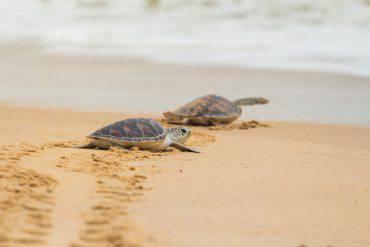 tartarughe-caretta-caretta-trapani-nascita