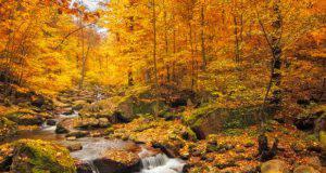frasi-novembre-autunno