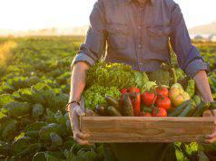 vacanza-fattoria-idee-viaggio-alternativo
