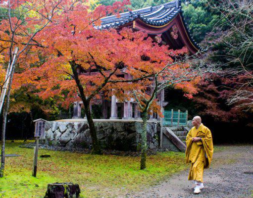 Momijigari giappone foliage autunno