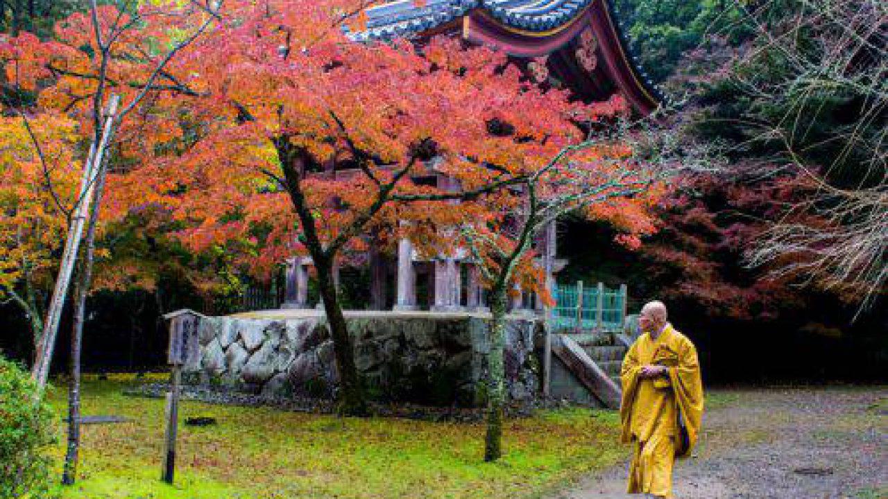 Acero Blu Giapponese giappone: alla scoperta del momijigari e del foliage autunnale