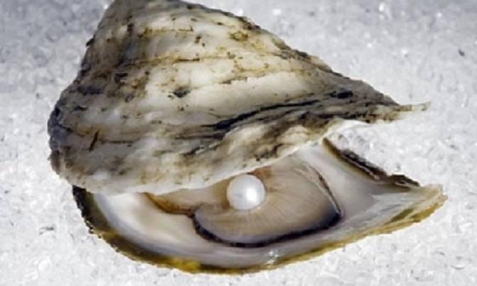perla ostrica ristorante