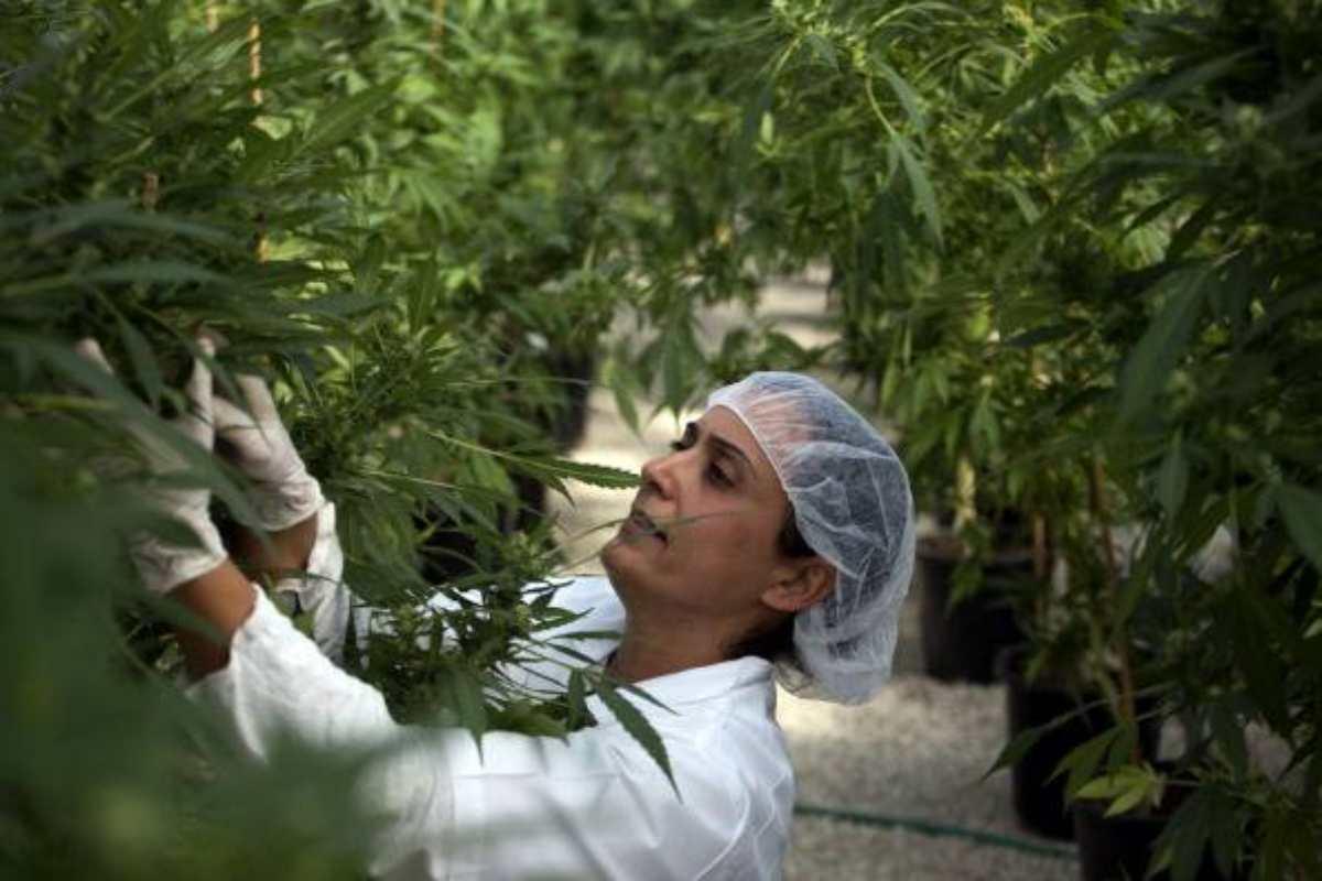 cannabis cassazione vieta vendita
