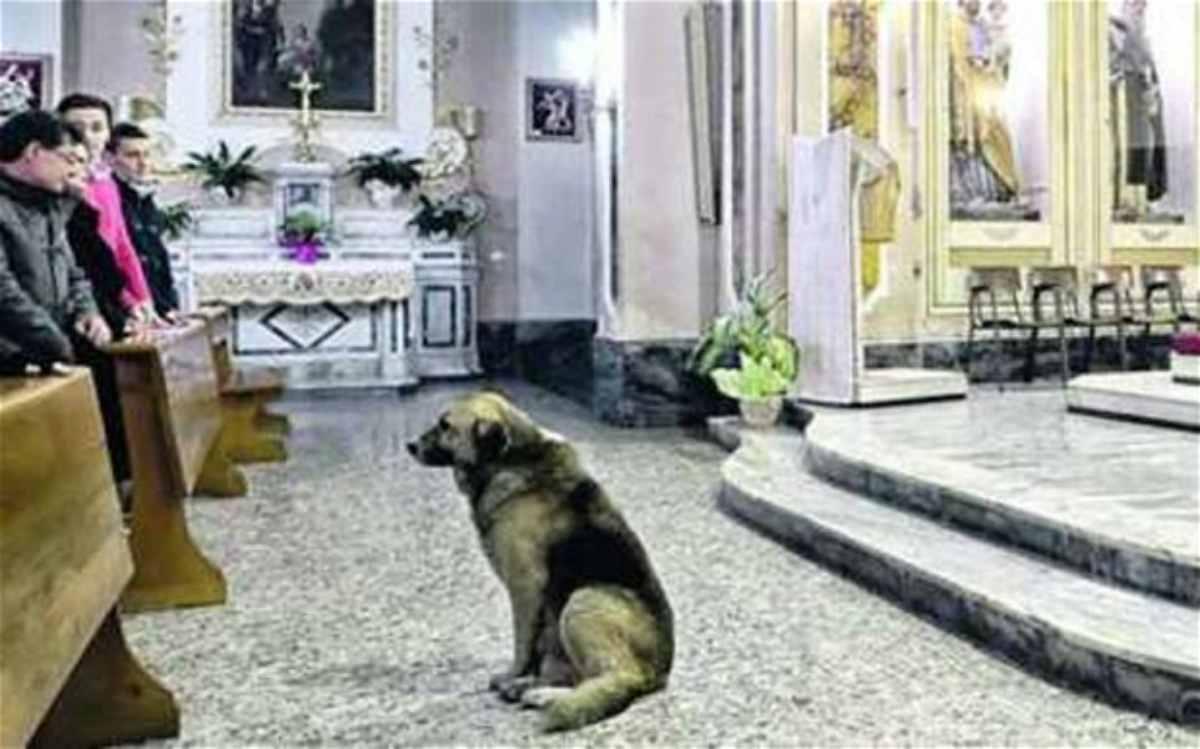 Cane prete chiesa