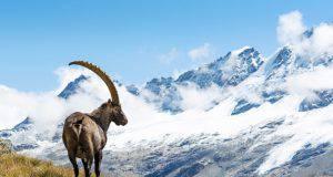 come-arrivare-parco-nazionale-gran-paradiso-valle-aosta