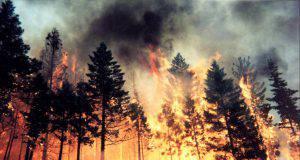 Incendio sul Col Rosà