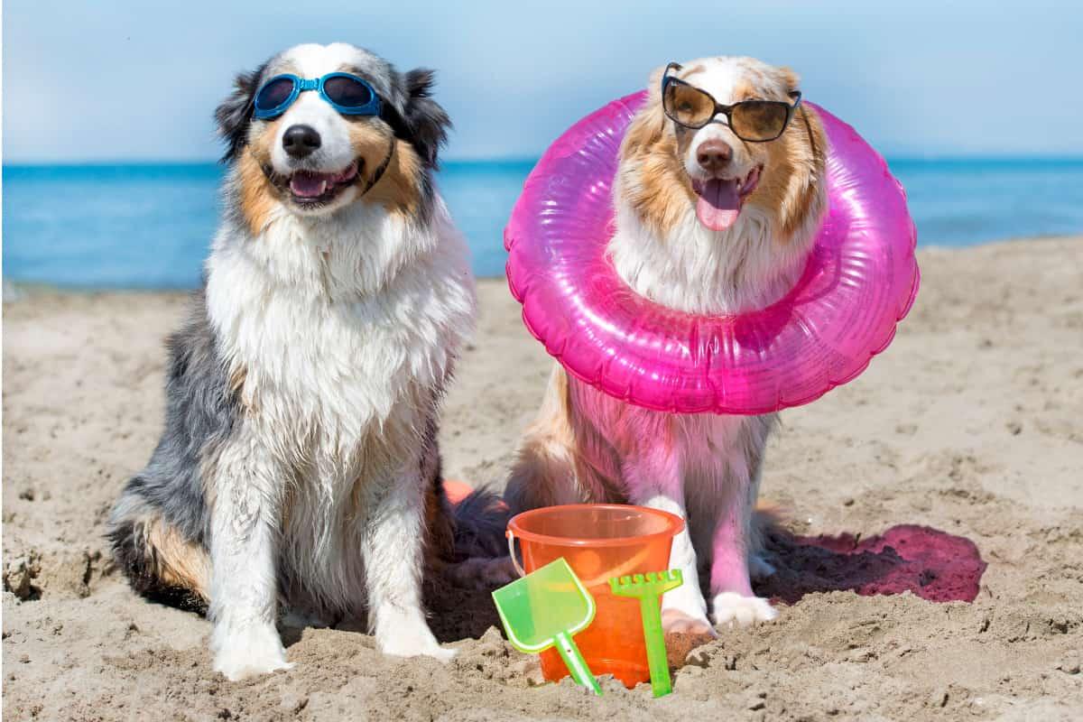 spiagge per cani dove italia