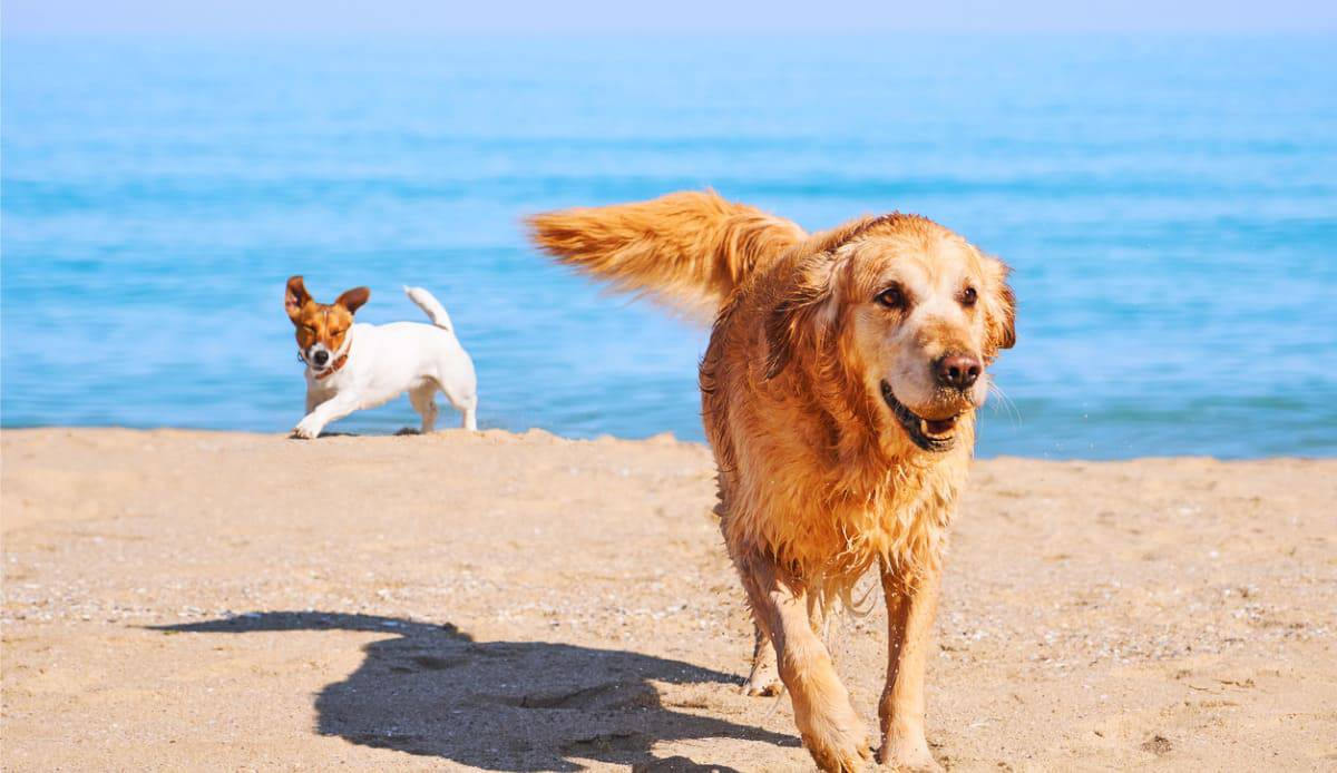 cani in spiaggia divieto