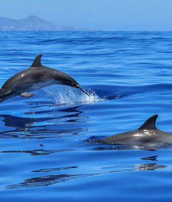 delfini-peschici-riva