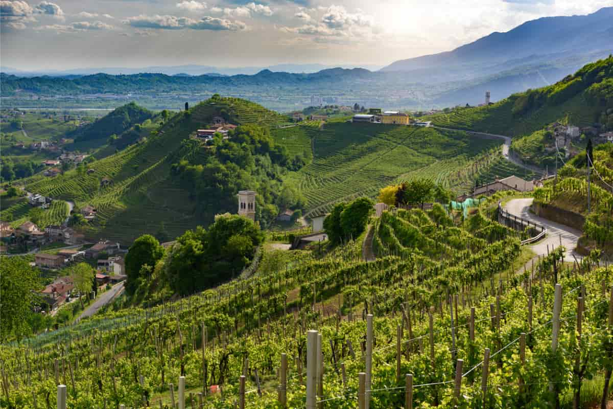 strade del vino italia