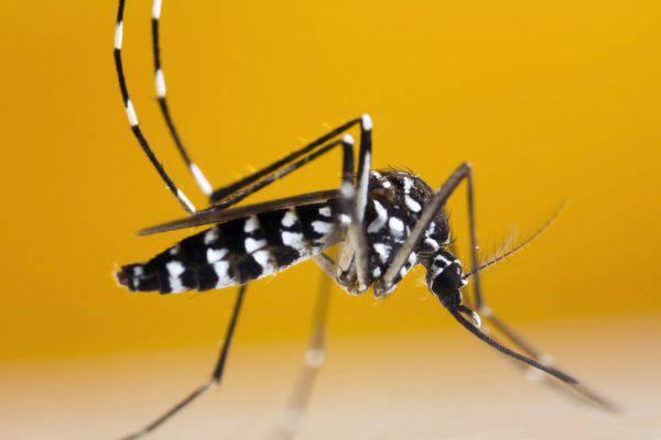 come eliminare zanzara tigre