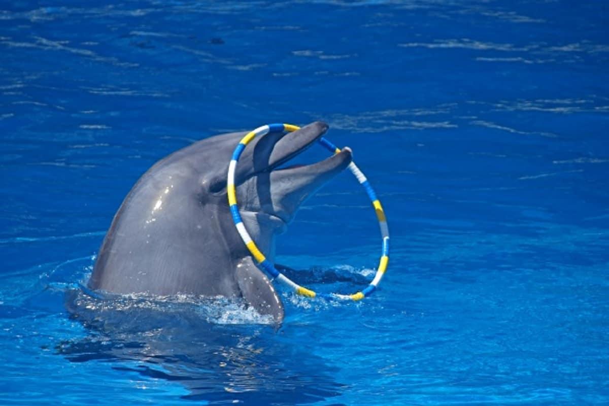 delfino morto 9 giorni