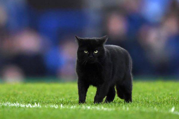 gatto nero celebrazione