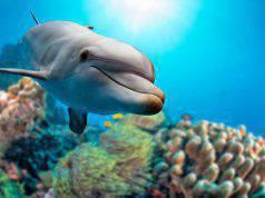 delfini, curiosità sulla loro vita