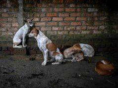 uccidere cani randagi