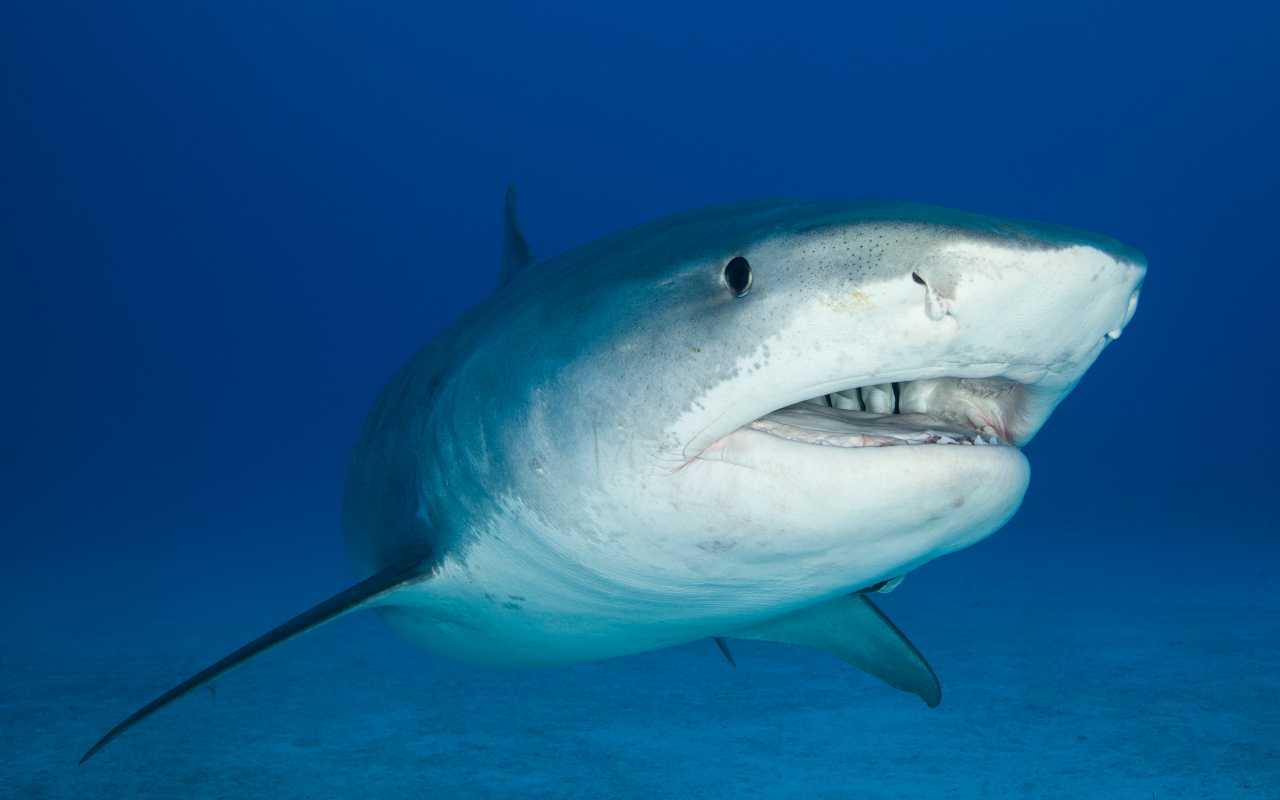 squalo mangia uomo