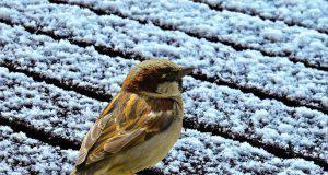 previsioni-meteo-12-13-dicembre-neve-bassa-quota (1)