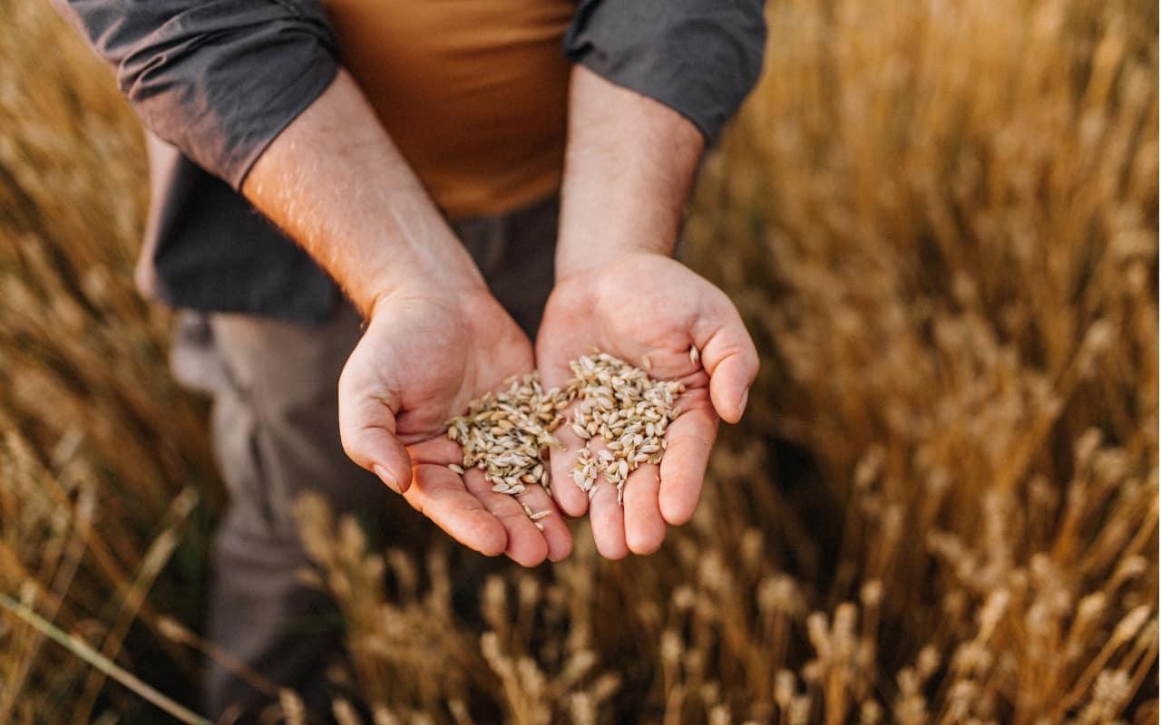 cibo pianeta futuro sostenibile