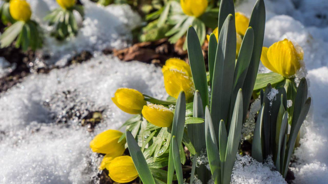 Il Freddo Quando Arriva meteo febbraio 2020: inverno addio, arriva la primavera