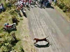 India, tigre entra nel villaggio e sbrana 3 persone: immagin