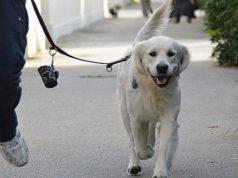 Vicenza, non raccoglie i bisogni del cane: passante glieli s