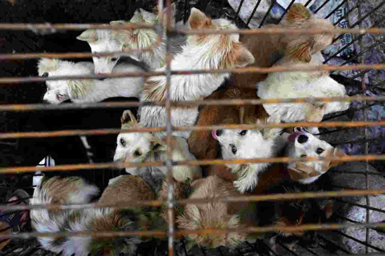 Cani Cina