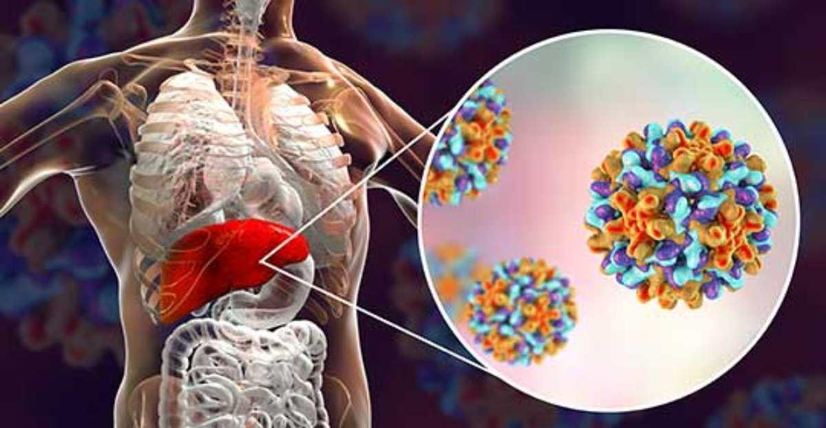Dai topi all'uomo: massimo allarme in Cina per un virus dell'epatite