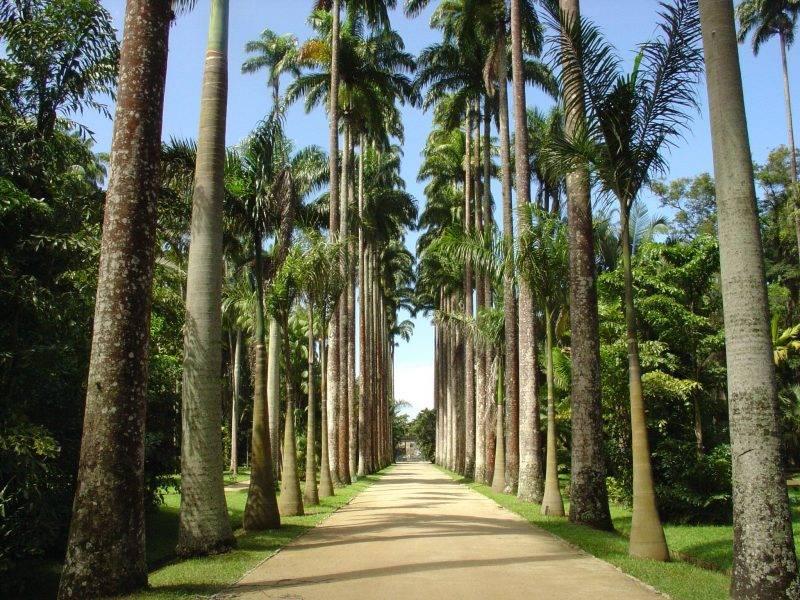 Il Giardino Botanico di Rio de Janeiro