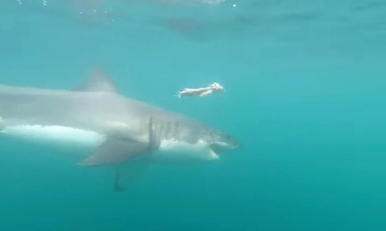 squalo uccide uomo