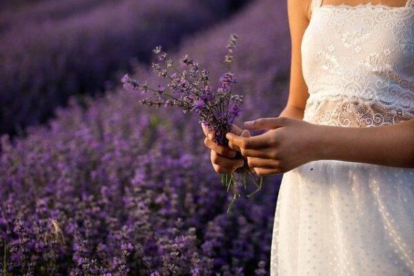 fioritura lavanda italia