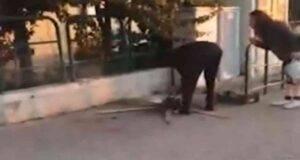 Gatto ucciso e cucinato per strada