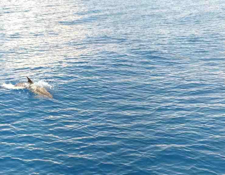 Quali sono i delfini e le balene del Mediterraneo