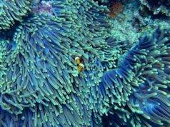 Viaggi e natura: il mare è inquinato e i coralli mangiano le