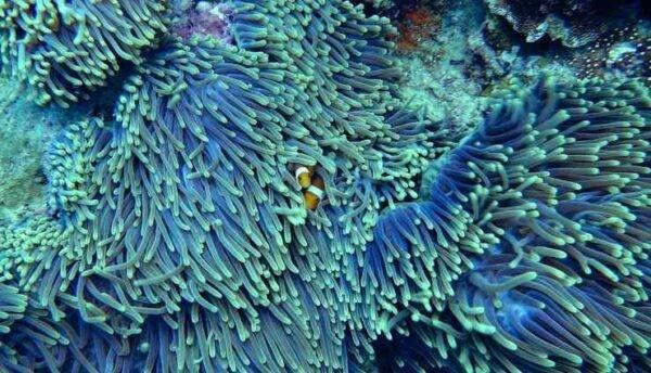 Coralli che mangiano la plastica