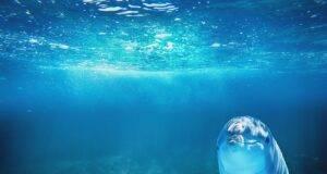 Dove si può nuotare con i delfini