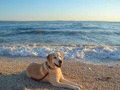 spiaggia cani sardegna