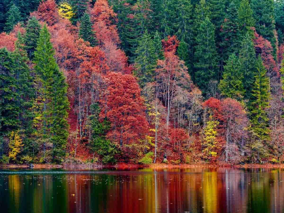 Foliage cos'è e dove vederlo in Italia: i luoghi più belli