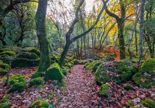 bosco sasseto