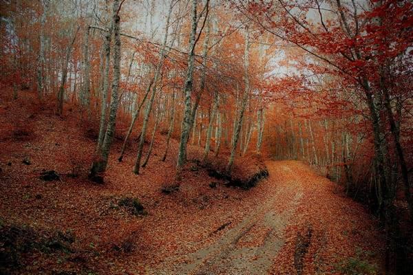 sila autunno