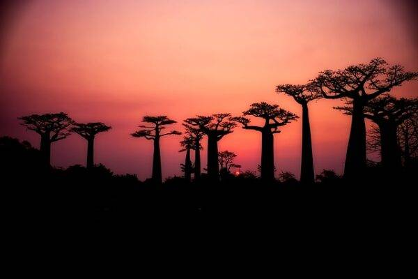 come usare il baobab per stare meglio
