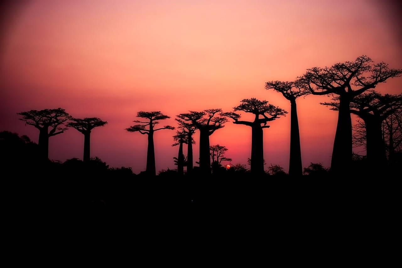 Cibi dal mondo: gli effetti benefici e di bellezza del baobab