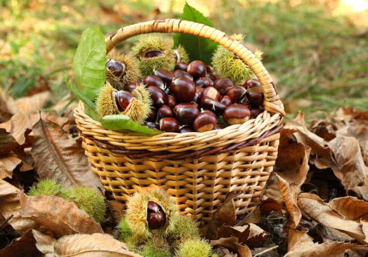 stagione castagne