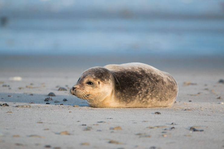 Vedere le foche in Europa