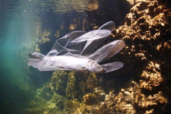 Sui fondali marini potrebbero esserci oltre 14 milioni di tonnellate di plastica