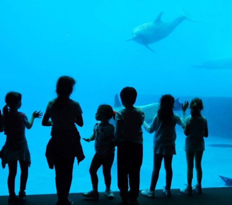 Acquario di Genova musei bambini online gratis
