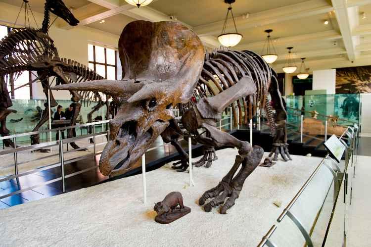 American Museum of Natural History, New York musei bambini online gratis