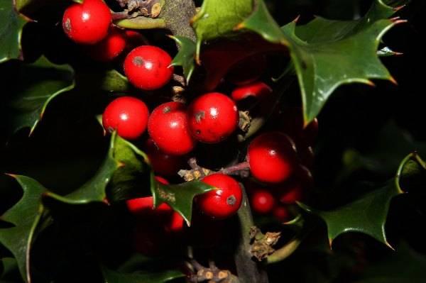 Il vischio di Natale Natale Italia cultura tradizioni