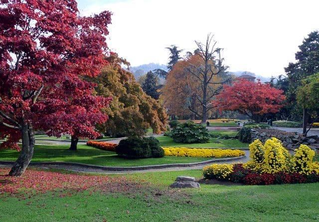 foliage parchi città