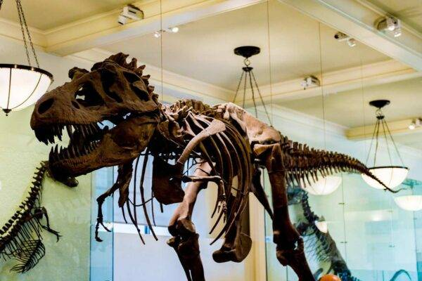 T-rex, American Museum of Natural History musei bambini online gratis