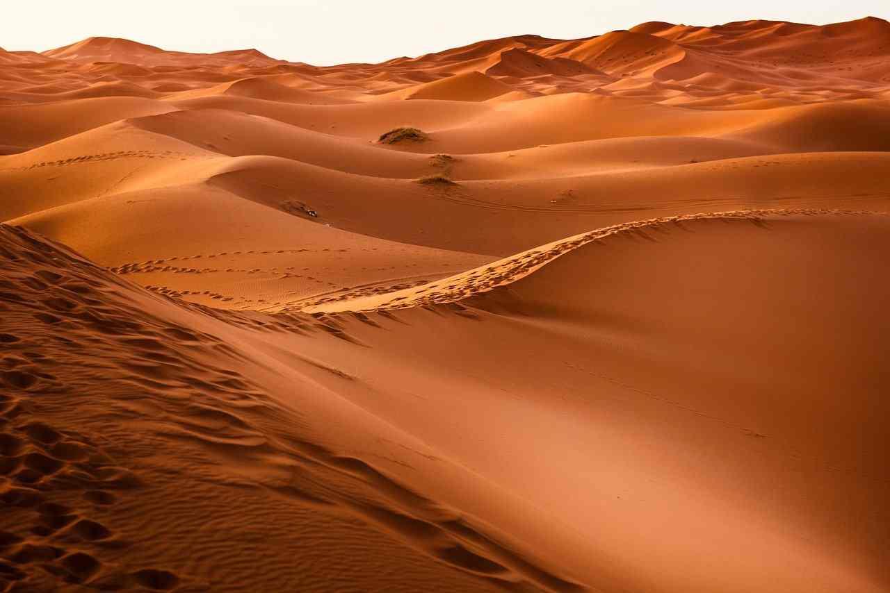 Come sopravvivono gli animali nel deserto